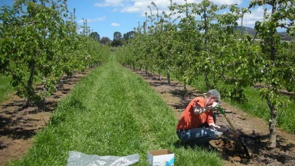 19 млн. лева за производителите на плодове, зеленчуци, рози и лозя