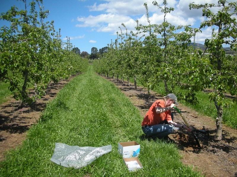 Подпомагат с 19 млн.лв. производителите на плодове, зеленчуци, рози и лозя