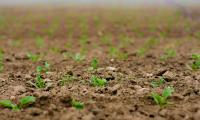 Българи изобретиха биостимулант за растения, намаляващ торенето с 40%