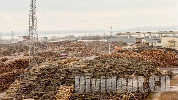 Превозвачи на дървесина вадели незаконно превозни билети от сайта на ИАГ, спират им достъпа