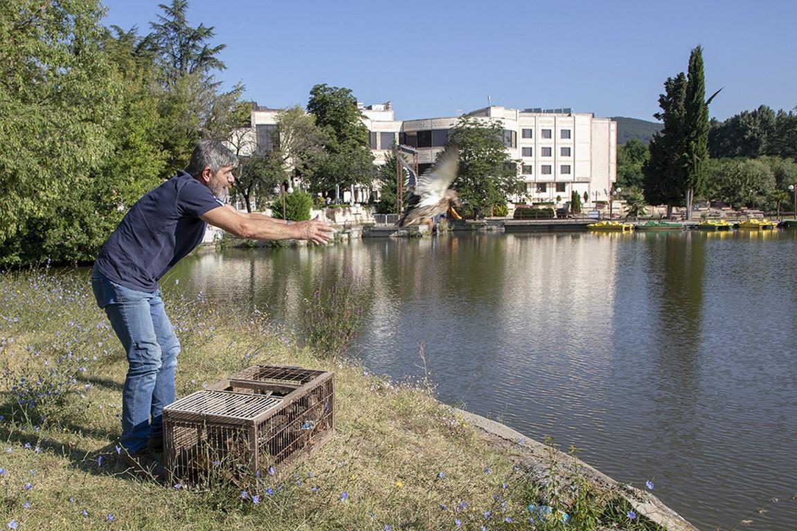 Пуснаха 30 диви патици в езерото Загорка и на Старозагорските бани