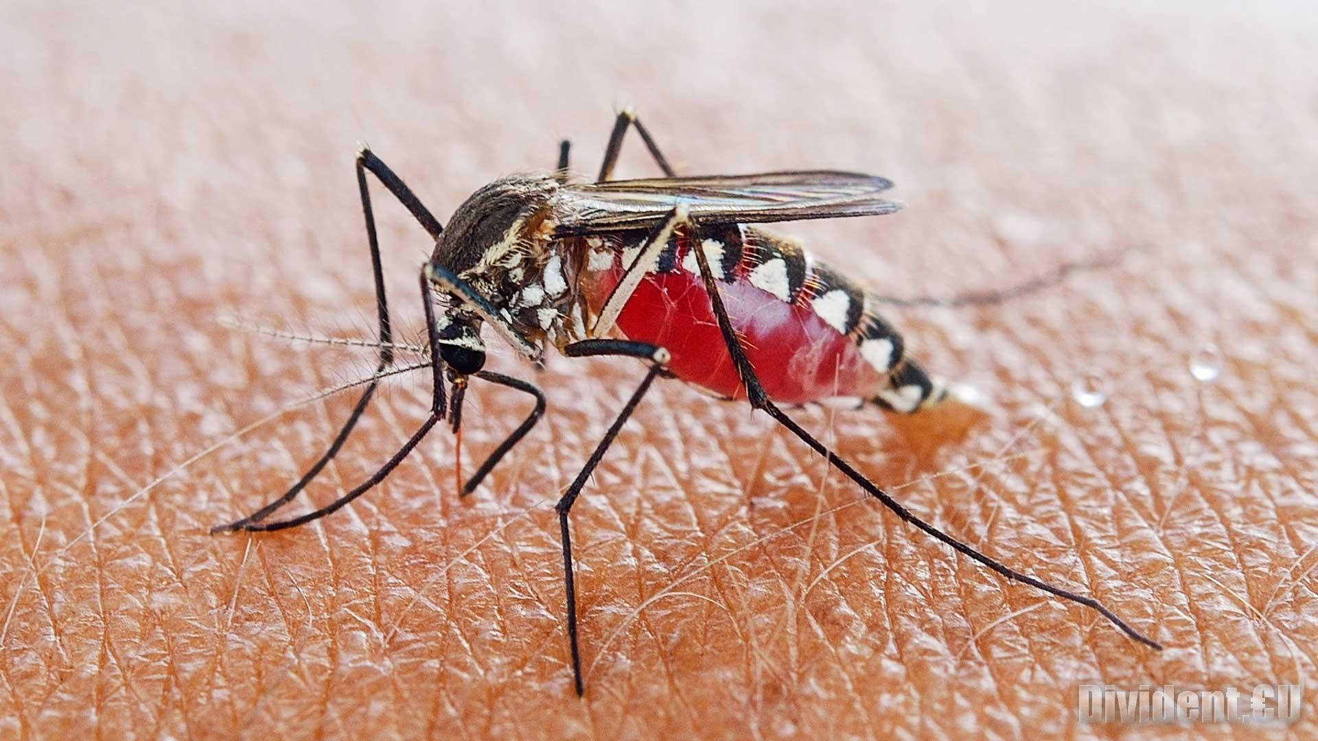 ИЗВЪНРЕДНО: За трети път ще пръскат срещу комари в Стара Загора