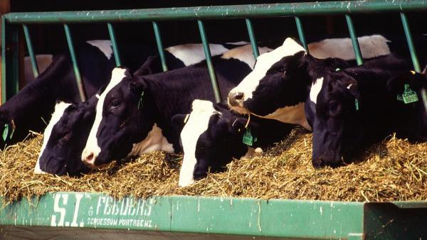 БАБХ проверява за заразени със салмонела фуражни храни от Бразилия