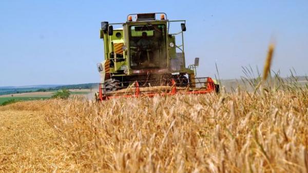 С 20% по-високи добиви от есенниците очакват в Старозагорско