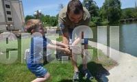 Пускат на свобода 25 зеленоглави патета в езеро Загорка