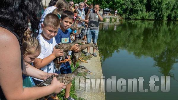 20 зеленоглави патета бяха освободени днес във водите на езеро Загорка