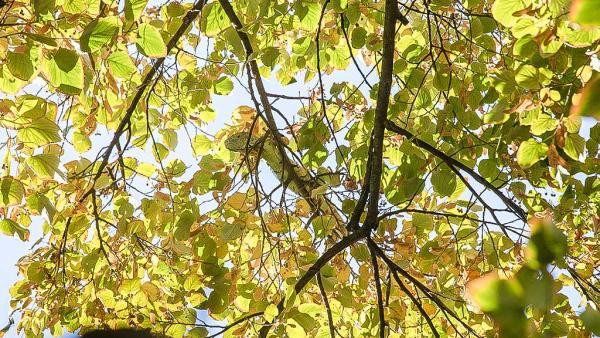 Свалиха зелена игуана от висок клон, избягала от частен дом в Стара Загора