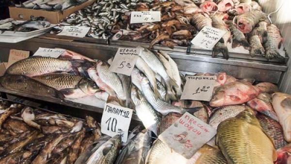 Унищожават 217 кг риба без документи, включително в Стара Загора